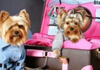 Аксессуары-для-животных-на-продажу