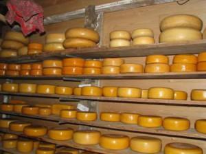 Производство сыра бизнес