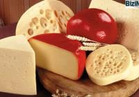 Производство-сыра-как-бизнес