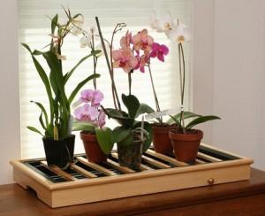 Выращивание орхидей на продажу