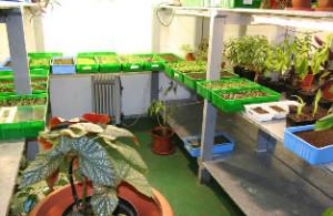 Выращивание рассады на продажу